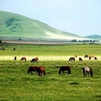围场坝上御道口牧场草原森林风景区位于承德市围场县木兰围场